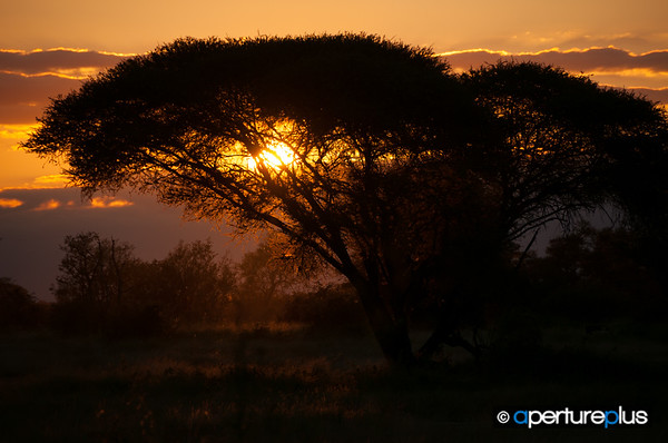 Kruger Sunset