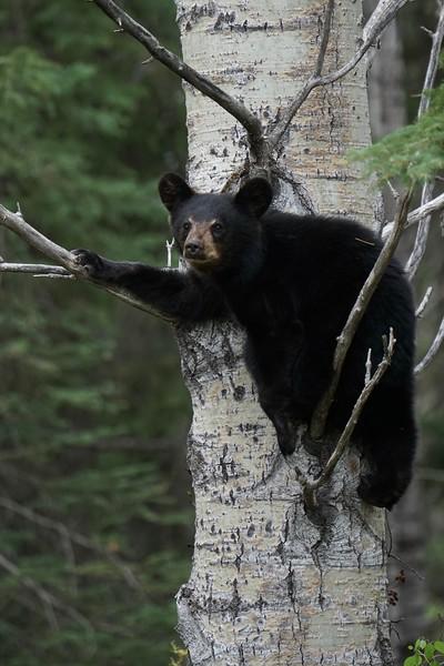 Tree Hangs