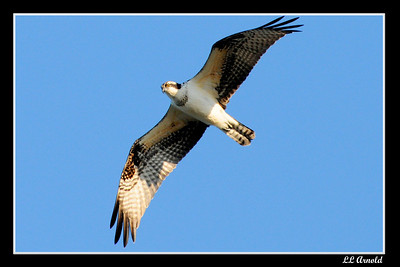 Osprey Land