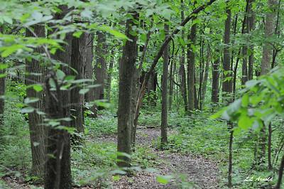 Elida woods