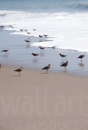 Sandy Beaches 025 | Wall Art Resource