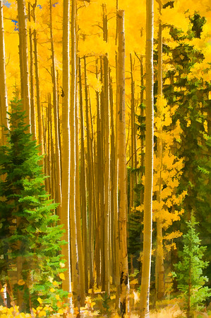 Colorado Fall Foliage 011 | Wall Art Resource