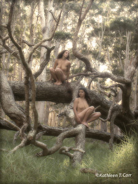 Koa Forest Nudes