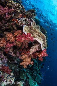 Vibrant Reef