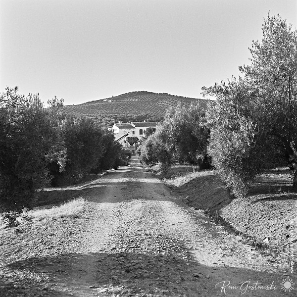 Driveway to the cortijo