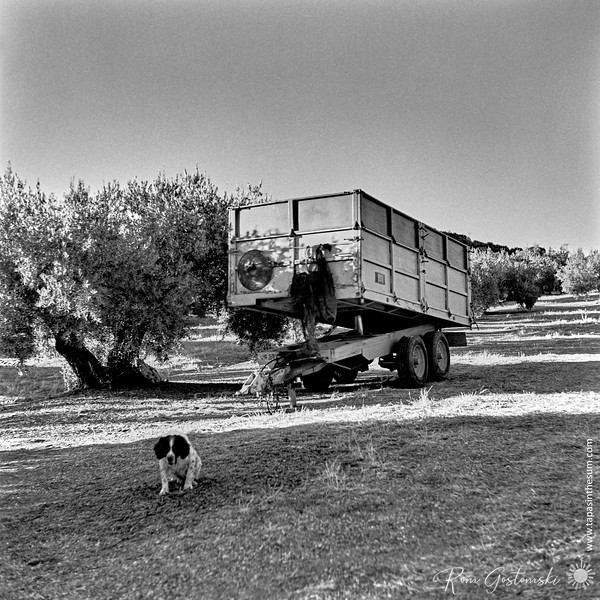 Trailer in the olive groves