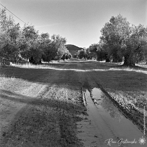 A muddy track through the olive groves