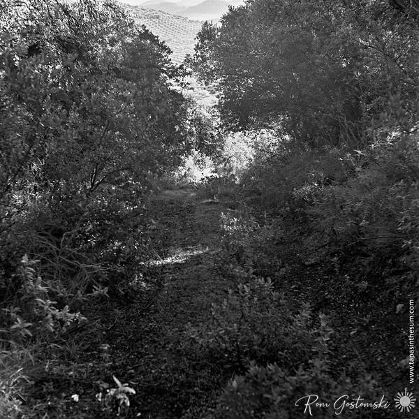 Overgrown track