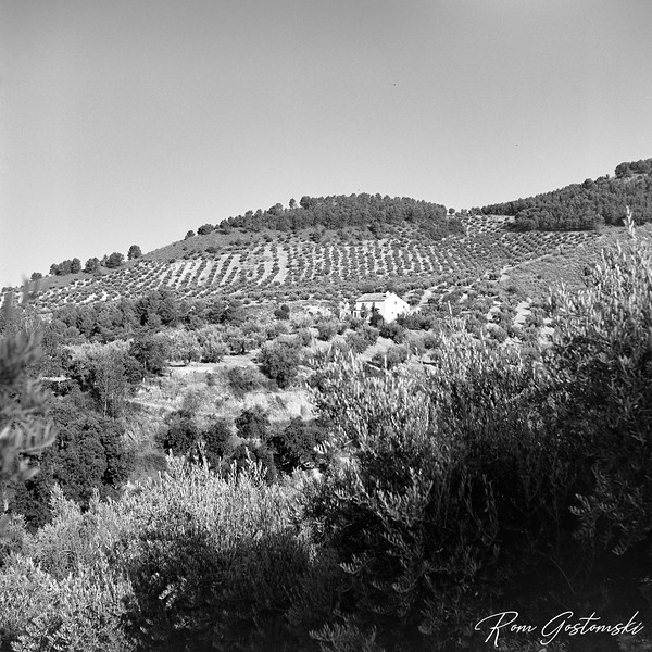 A solitary cortijo in the olive groves