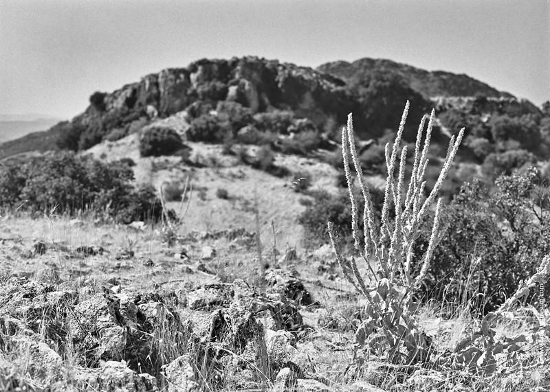 Sierra Caracolera - dried flowers