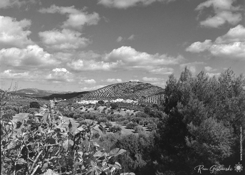 La Carrasca nestling in the olive groves