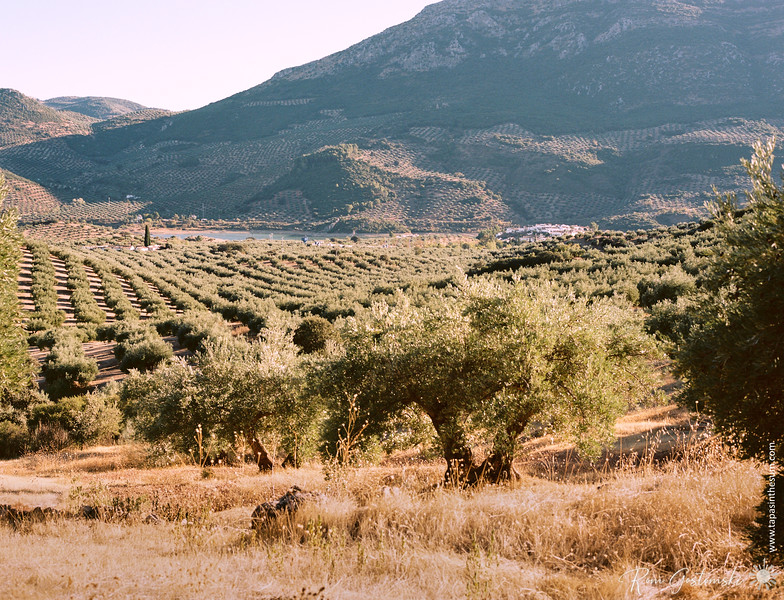 Olive groves, the Viboras reservoir and mountains