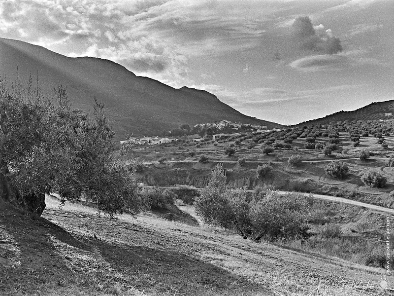 A white village in the olive groves