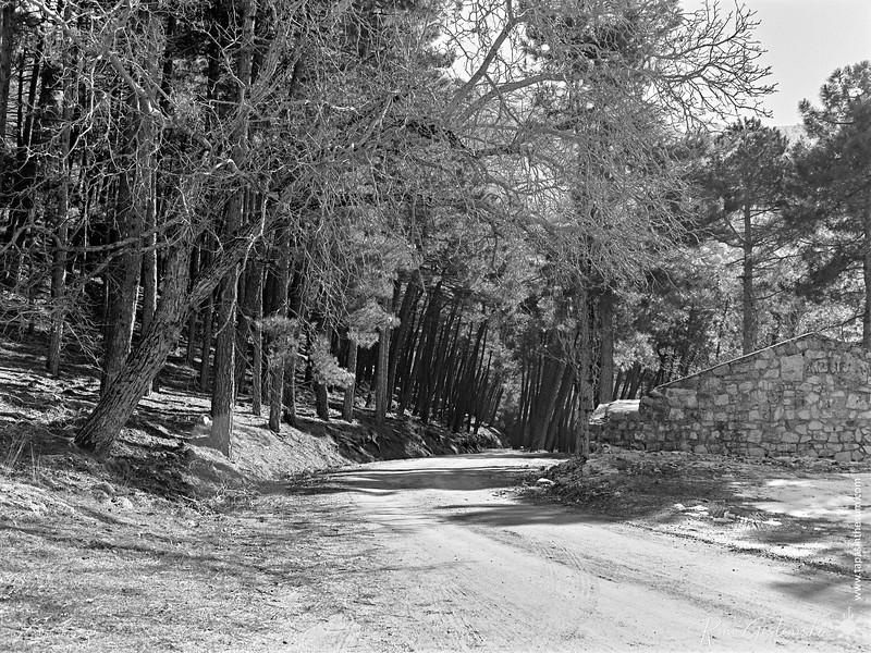 Forest track, El Chorro near Cazorla