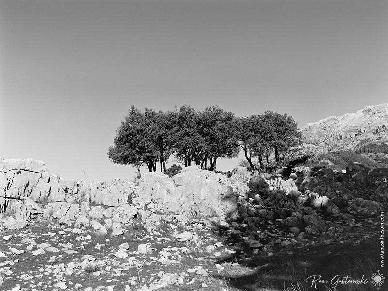 Trees amongst the rocks