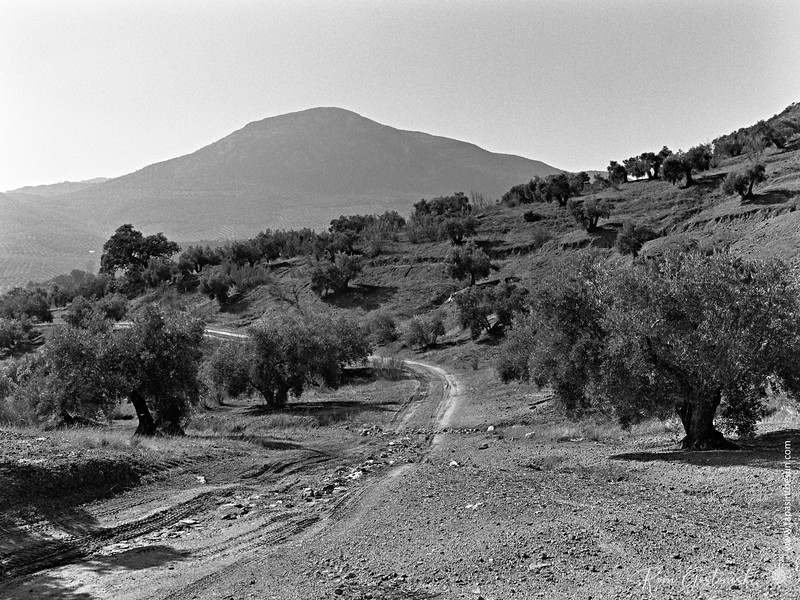 A track next to the cortijo. This is now used by olive farmers.