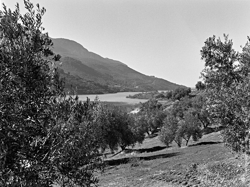 A view of the lake in the olive groves from the cortijo
