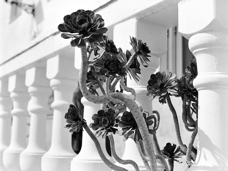 Plant poking through a balustrade