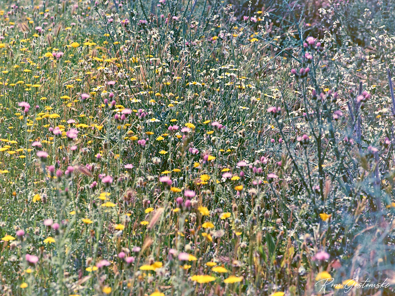 Wild flowers of Andalucia