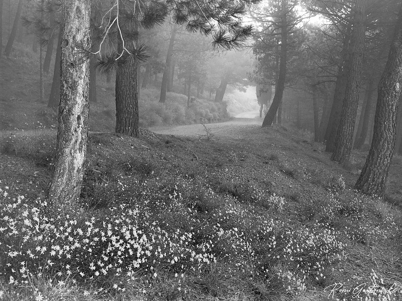 Forest track in the mist.