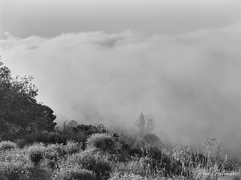 I witnessed this amazing cloud inversion in the Alpujarras near Cortijo Prado Toro in late June.  Conditions were constantly changing. I was right on the edge of the clouds; at times, I was in them.