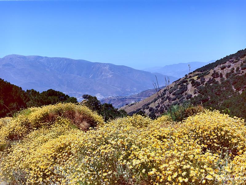 Wild flowers in the Alpujarras