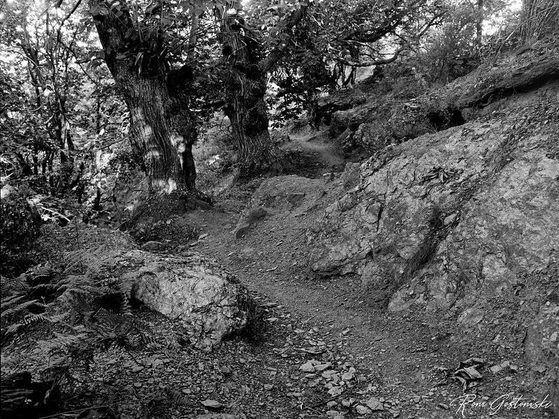 A trail in the Alpujarras