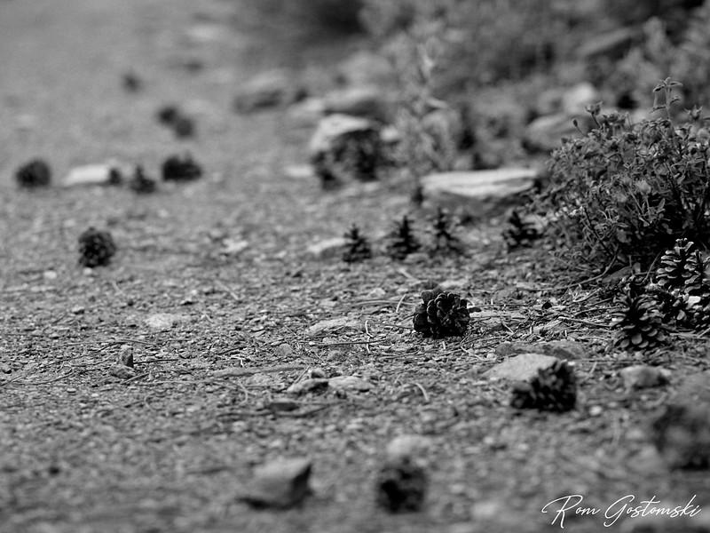 Pine cones and stones