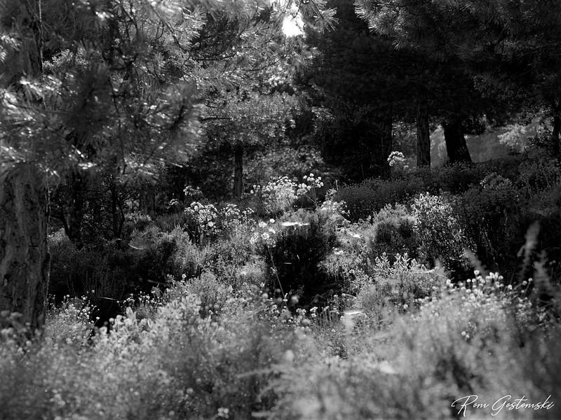 A walk through the forest near Cortijo Prado Torro