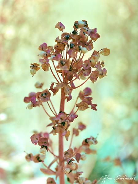 Macro photo of a wild flower.