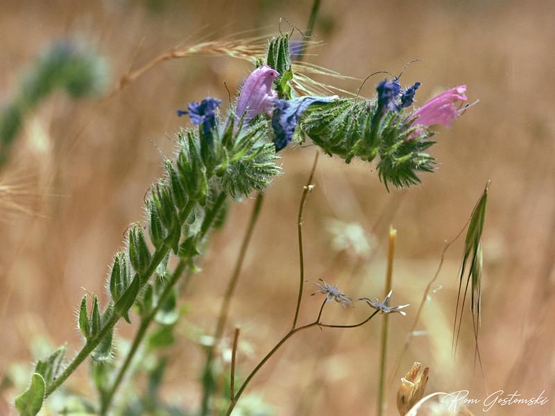 Macro shot of a wild flower