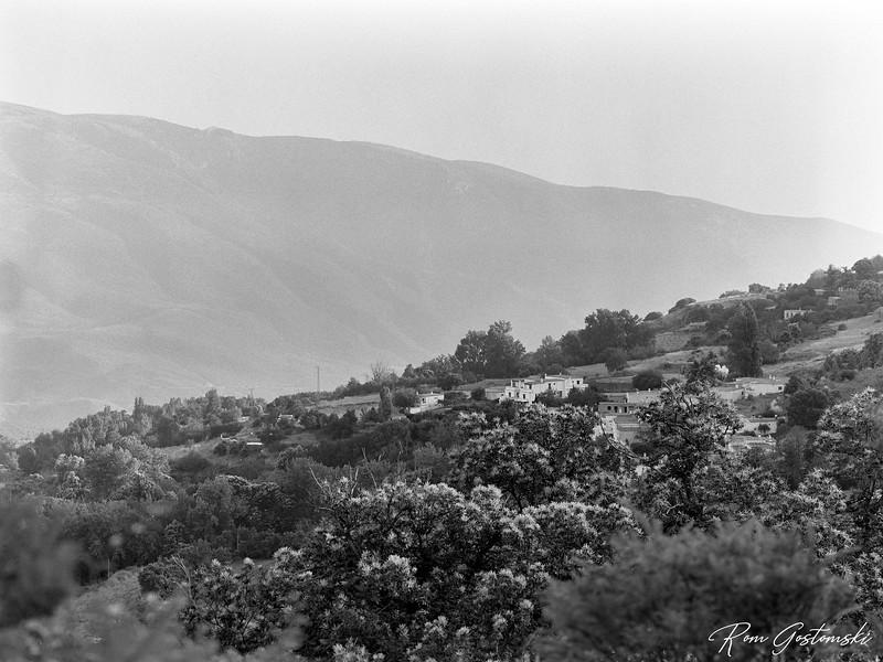Flowering chestnut trees in the Alpujarras
