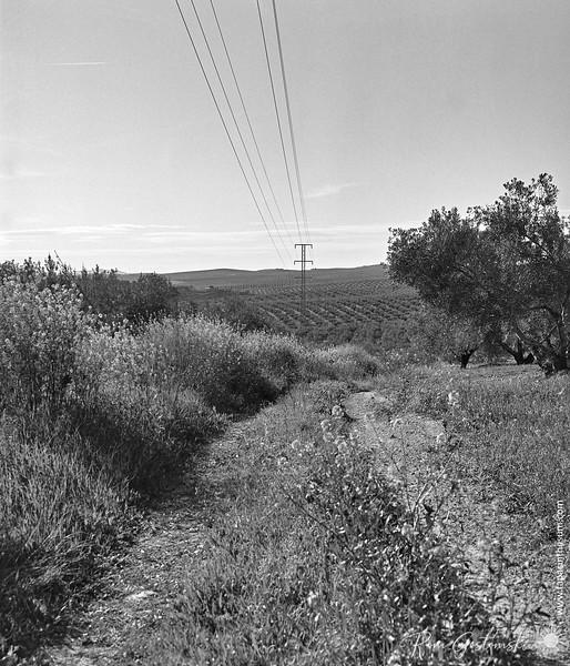 Olive farmer's track