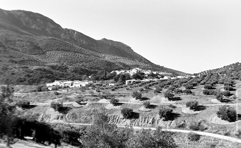 The olive groves around the village of Las Casillas