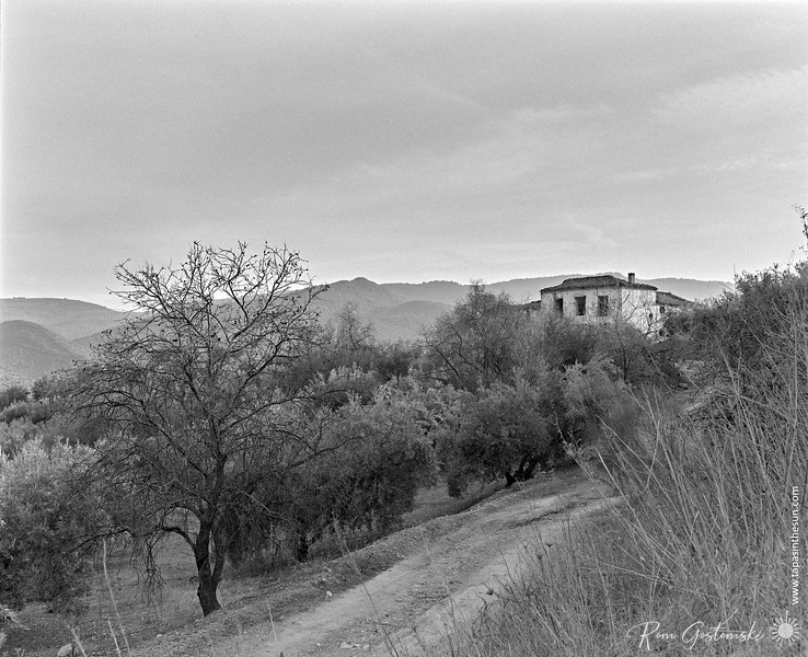 Track through the olive groves leading to the abandoned cortijo