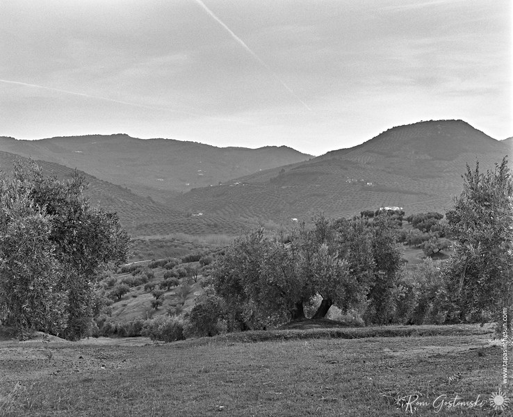 Olive groves and mountains
