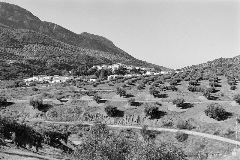The village of Las Casillas nestling amongst the olive groves