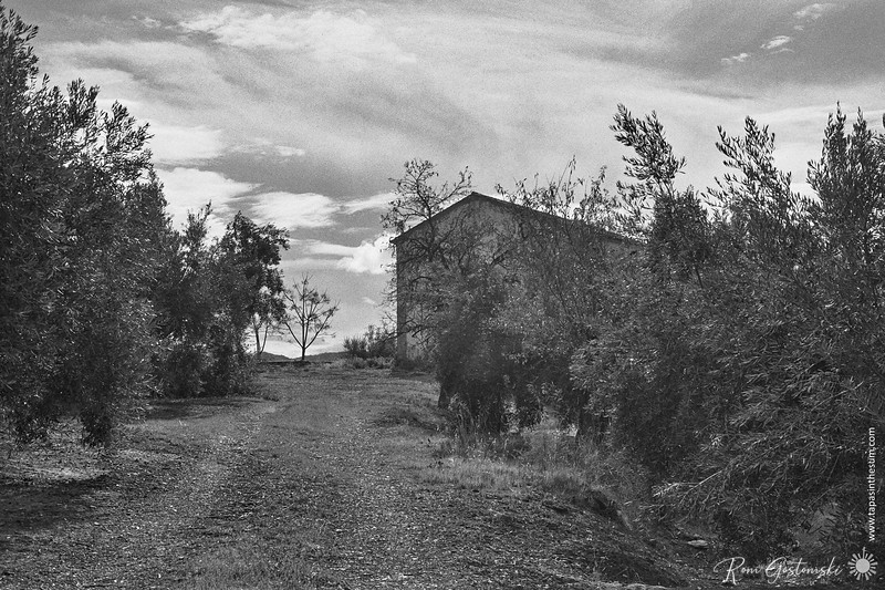 The track to an abandoned cortijo