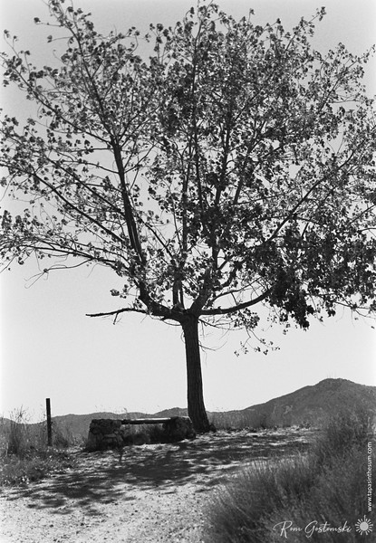Mirador del Gargantón - the tree and bench