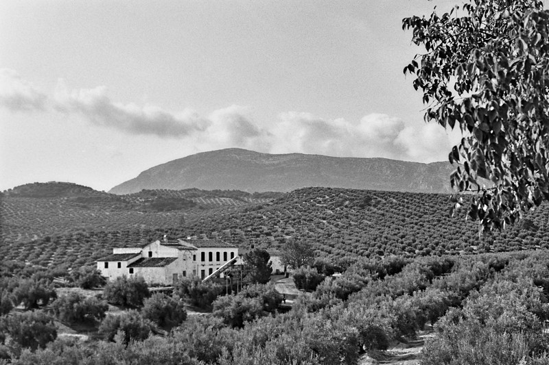 Cortijo amomgst the olive groves