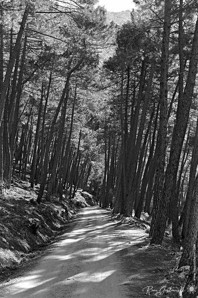 A forest track