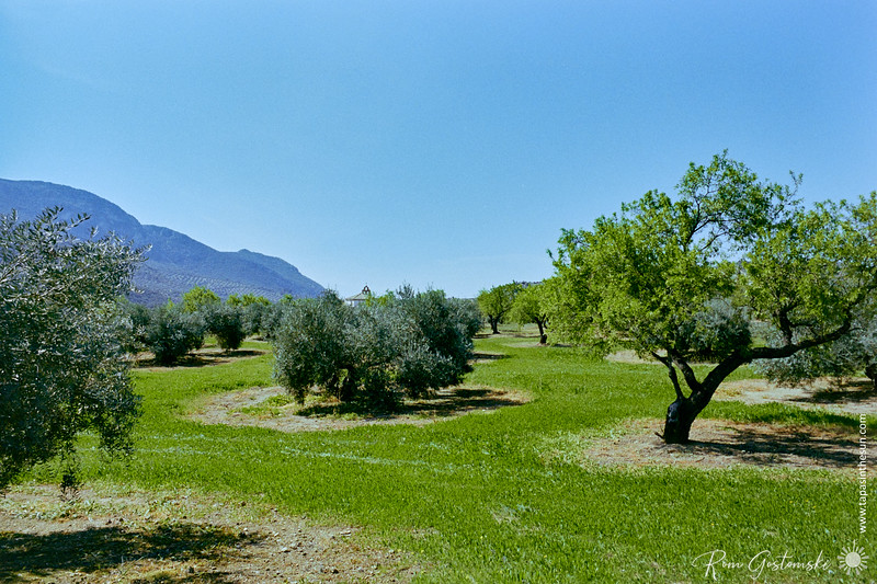Almond trees and olive trees