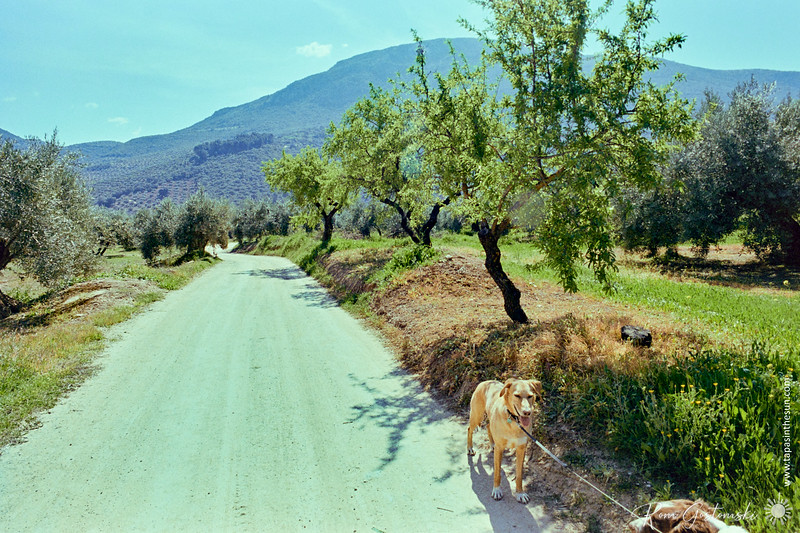 Almond trees by the dirt track
