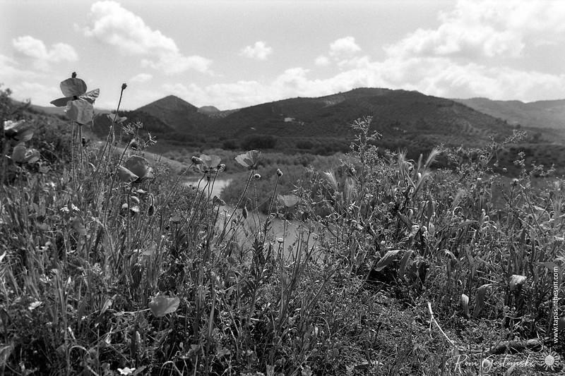 The river Viboras