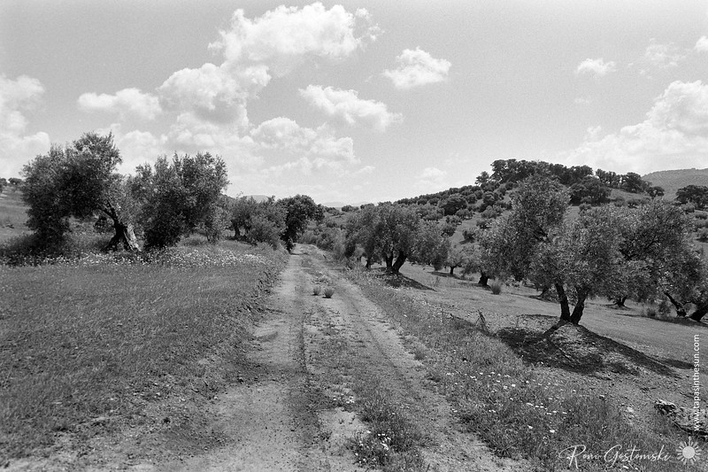 The farmer's track through the olive groves