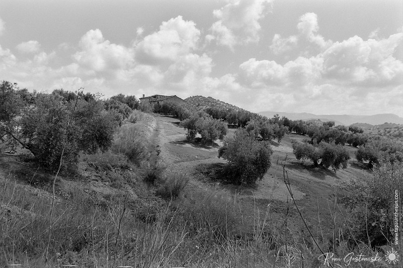 Abandoned cortijo in the olive groves