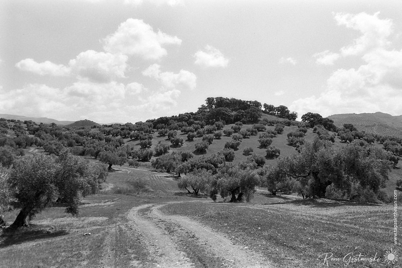 They don't grow olive trees on top of the hill
