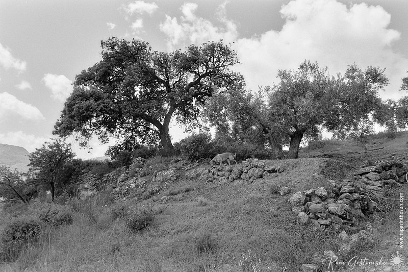 Not all trees are olive trees in Andalucia!