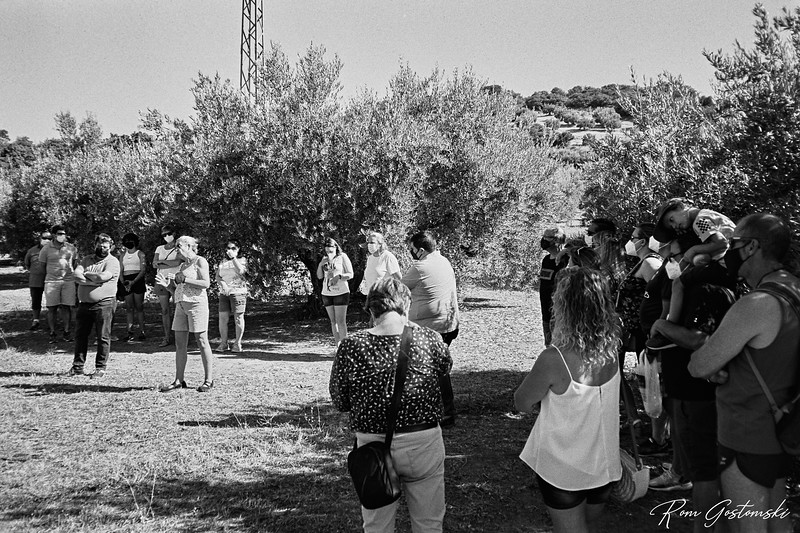 Tour of the olive groves