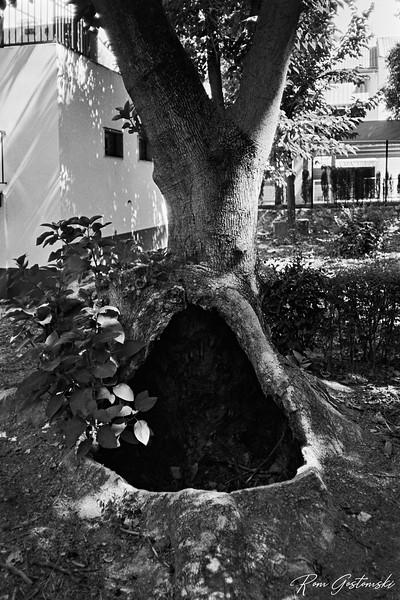 Tree cave. In Alcaudete Park